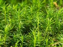 Forest Moss Photographie stock libre de droits