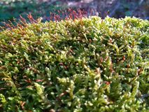 Forest Moss Arkivbilder
