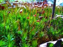Forest Moss Arkivfoton