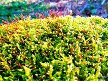 Forest Moss Royaltyfri Bild