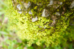 Forest Moss Stockbilder