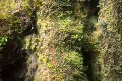 Forest moss background macro photo Stock Image