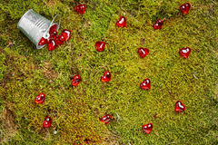 Forest moss with bucket and red  hearts Royalty Free Stock Photos