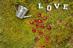 Forest moss with can and hearts stock image
