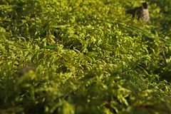 Forest moss close up macro photo. Forest moss close up macro photo zoomed in stock photos