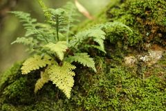Forest moss Stock Photography