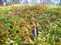 Forest moss Stock Image