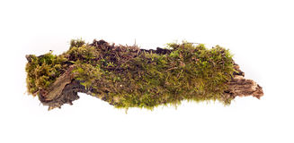 Forest moss isolated. Moss on driftwood on a white background Royalty Free Stock Image