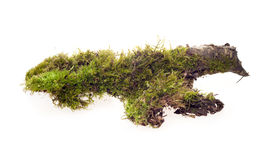 Forest moss isolated Royalty Free Stock Photos
