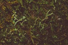 Forest moss in macro photography. Separate living world royalty free stock images