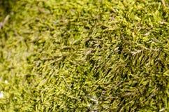 Forest Moss nave royalty-vrije stock afbeeldingen