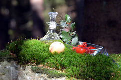 Forest moss picnic food Stock Images