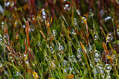 Forest moss after rain Stock Image