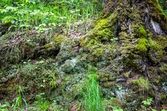 Forest moss, spring day. Close stock photography