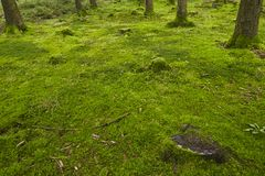 Forest with moss Stock Images
