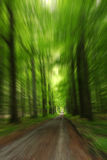 Forest motion Stock Image
