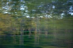Forest in motion. Background with forest in motion Stock Photo