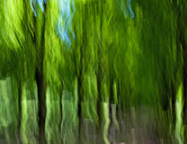Forest-motion blur Royalty Free Stock Image