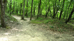 Forest and mounds Stock Image