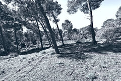 Forest on the Mount Tabor Stock Photography
