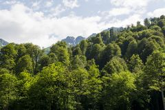 Forest and mountain stock images