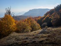 Forest and mountain. Autumn beautiful forest and mountain Royalty Free Stock Image