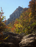 Forest and mountain. Autumn beautiful forest and mountain Stock Images