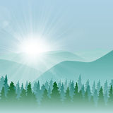 Forest Mountain Background. Forest background with fir trees and mountains, and morning sun with rays Stock Photography