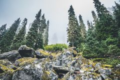 Forest on the mountain. Cold forest photo on the rocky mountain near Seattle royalty free stock images