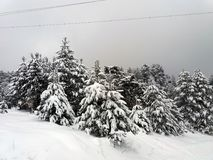 Forest on a mountain covered with snow Stock Image