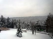 Forest on a mountain covered with snow Stock Images