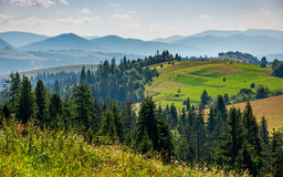Forest on a mountain hillside in rural area. Forest in mountain rural area. green agricultural field on a hillside. beautiful summer scenery in pleasant weather Royalty Free Stock Image
