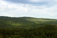 Forest on the mountain landscape Royalty Free Stock Images