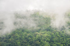 Forest on the mountain with the mist. Stock Images