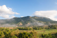 Forest mountain in the morning Royalty Free Stock Images