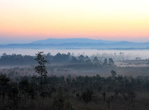 Forest and mountain in morning sunrise. Stock Photos