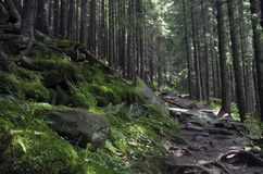Forest mountain path Stock Photography