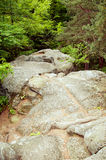 Forest mountain path Stock Images