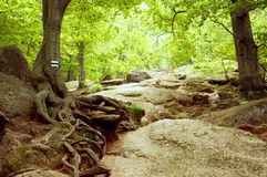 Forest mountain path Royalty Free Stock Photo