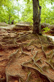 Forest mountain path Stock Photos