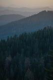 Forest Mountain Ranges hermoso fotos de archivo libres de regalías