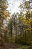 Forest mountain road. In autumn idyll Royalty Free Stock Image
