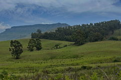 Forest in mountain of Royal Natal National Park in Drakensberg Royalty Free Stock Photography