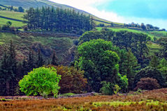 Forest and mountain scene. A scenic view of a mountainside with vibrant trees and greenery Royalty Free Stock Image