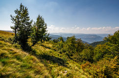 Forest on a mountain slope Royalty Free Stock Photos