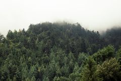 Forest on a mountain slope royalty free stock images