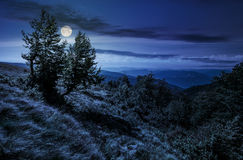 Forest on a mountain slope at night. Forest around the meadow on a steep mountain slope at night in full moon light Stock Photos