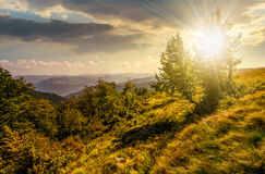Forest on a mountain slope at sunset Stock Images