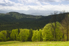 Forest mountain in spring with dramatic sky. Carpathian, Ukraine. Royalty Free Stock Photo