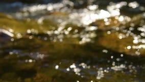 Forest Mountain Stream Blur banque de vidéos